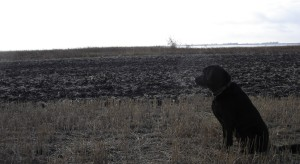 Link to Video of Duck Hunting Trip to NoDak