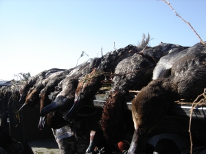 Link to Duck Hunting Video, Best of 2009