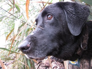 Link to the Best of 2011 Duck Season Video