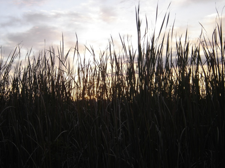Sunrise at Harsen's Island