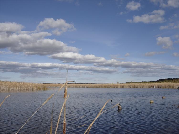 Diverse species of ducks on Hubbard Lake