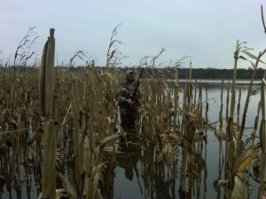 Hunting in Flooded Corn is awesome