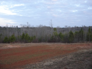 Food Plot with Red Clay