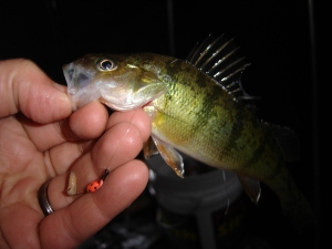 Pink Jig and baby Perch