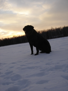 Black Lab ice fishing
