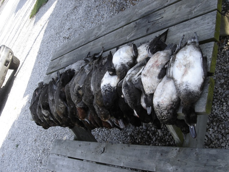 Limited out 30 ducks