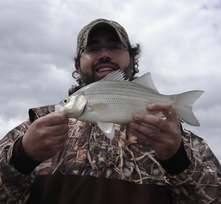 White Bass caught in the Maumee River