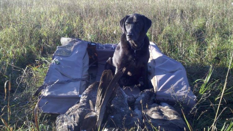 Successful field hunt in early goose season