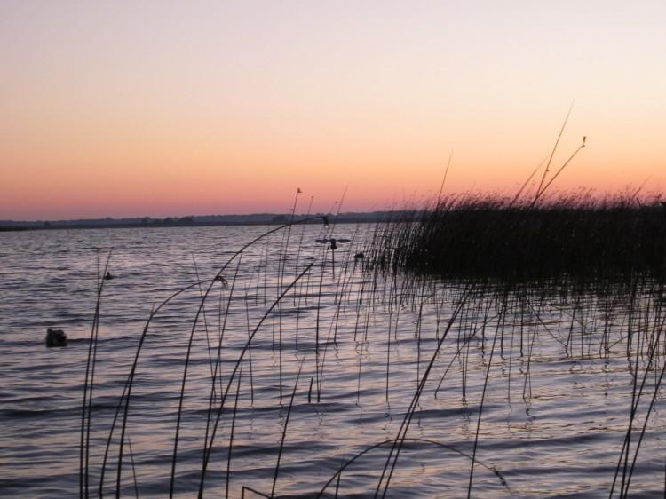Dawn breaks in the duck marsh