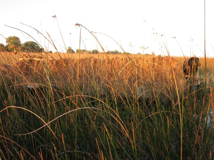 Avery Killer Weed boat blind in marsh