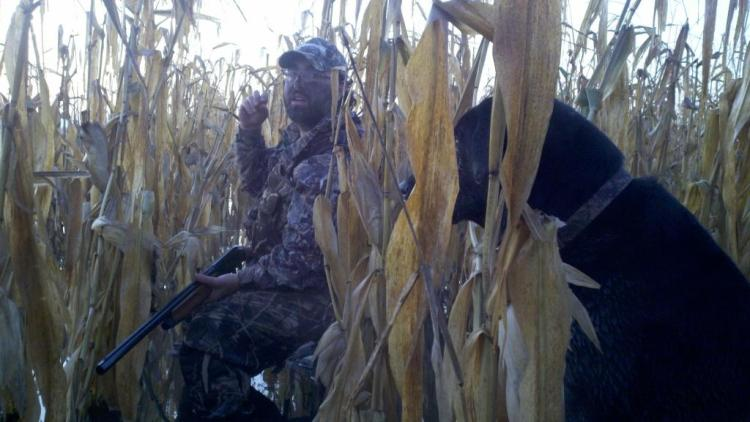 Duck hunter with his lab in flooded corn