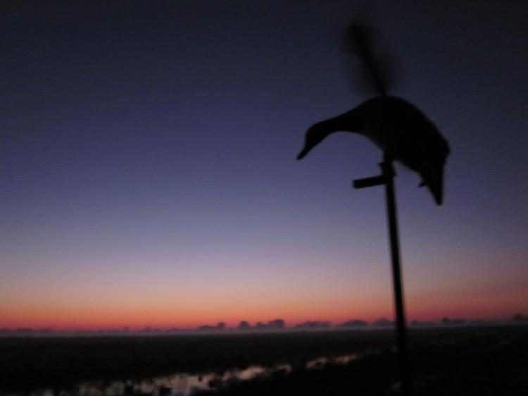 Mojo Mallard with sunrise background
