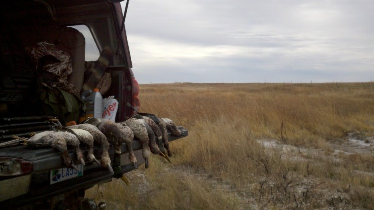 Limit of ducks on the tailgate