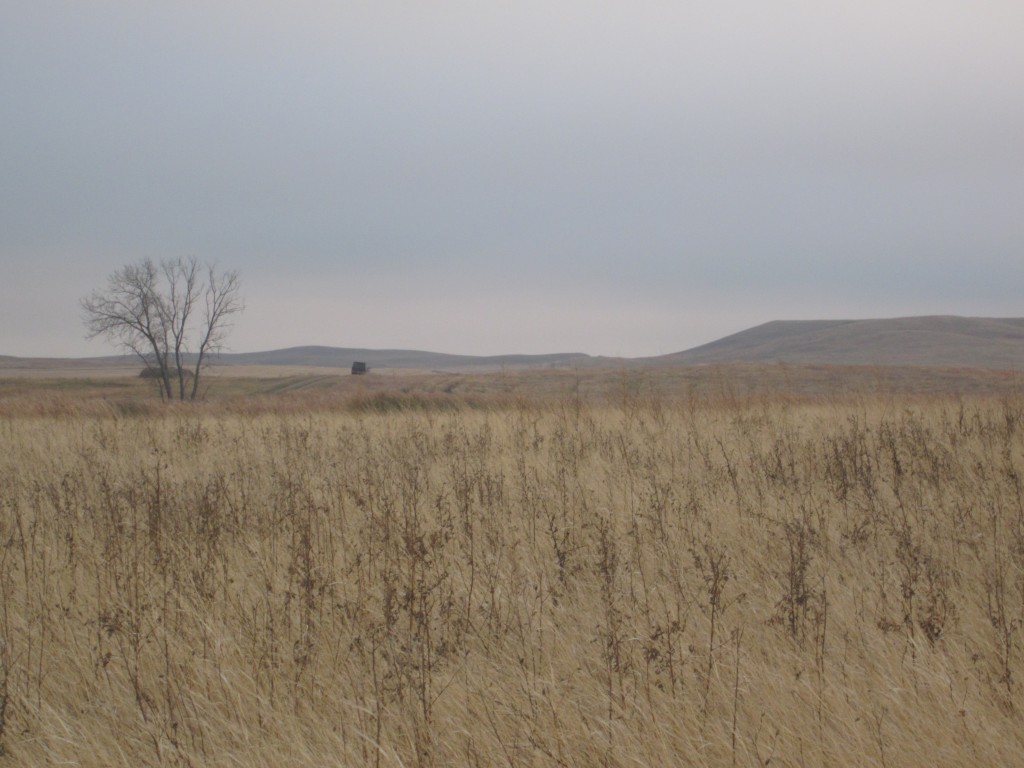 Field in NoDak