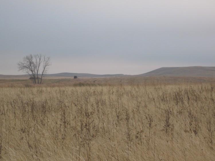 Field in NoDak