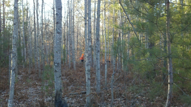 Grouse hunter in the Woods
