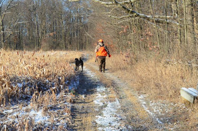 black lab and upland hunter