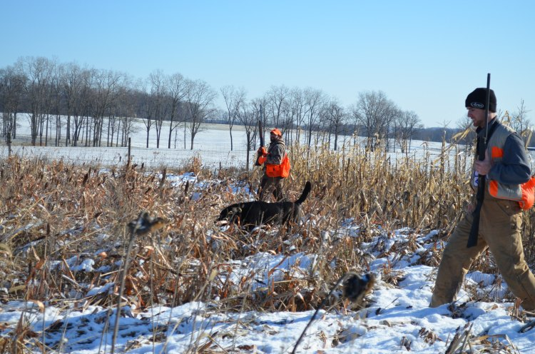 upland hunters in a field