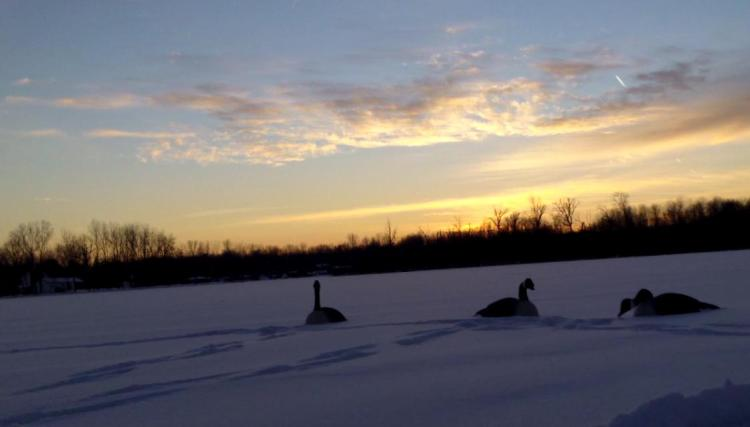Decoys at Sundown